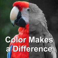 Color Makes a Difference